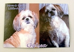 Pet Photo Mousepad 9